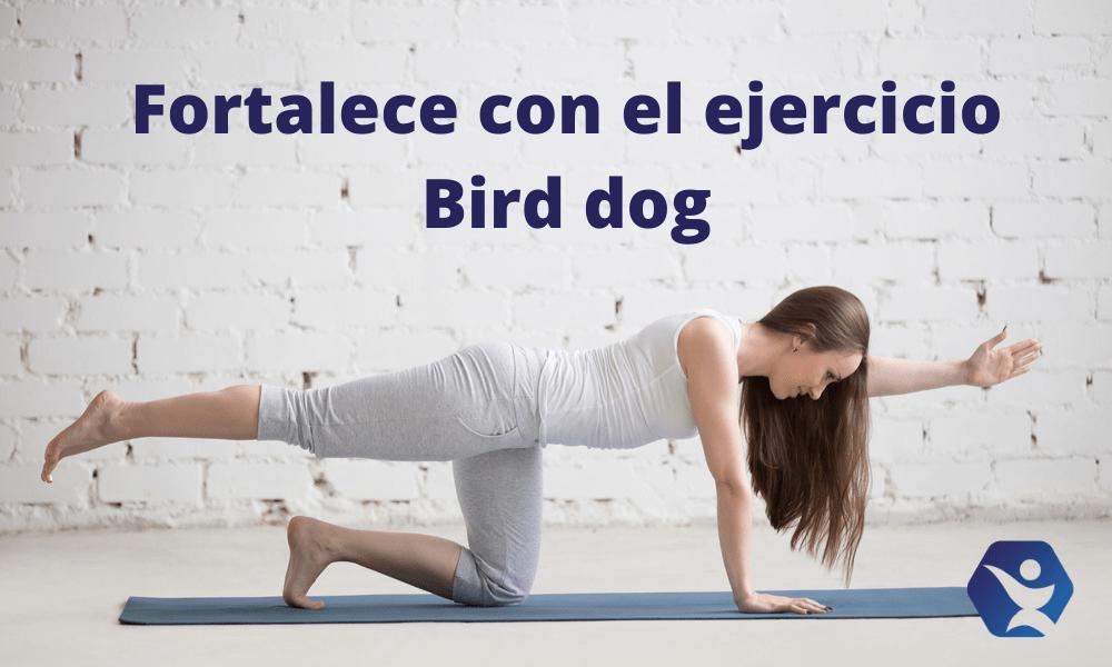 Conoce el bird dog ejercicio para fortalecer